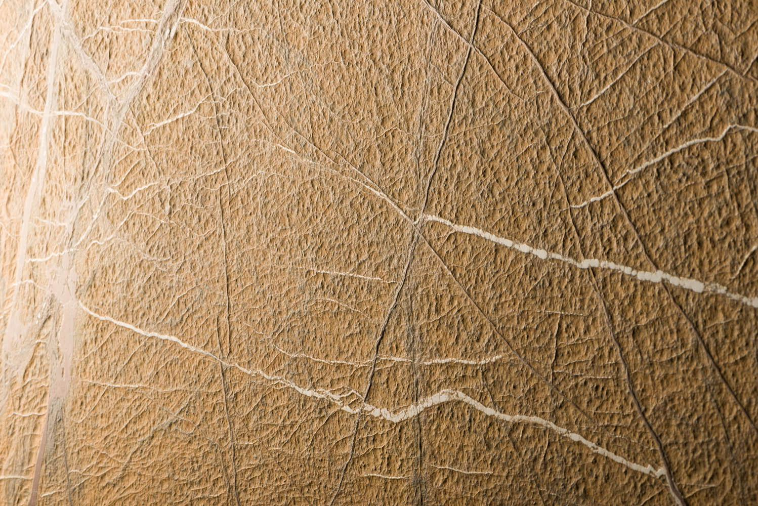 Rain Forest Brown THE BEAUTY AND THE INCREDIBLE DESIGN OF ITS VEINING